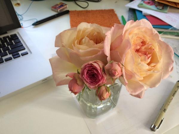 london plane roses